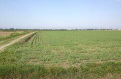 Terreno Agricolo in vendita Montaletto