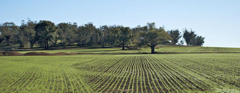 Le Imposte per l'acquisto di Terreno Agricolo