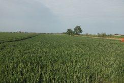 Terreno agricolo in vendita a Cervia