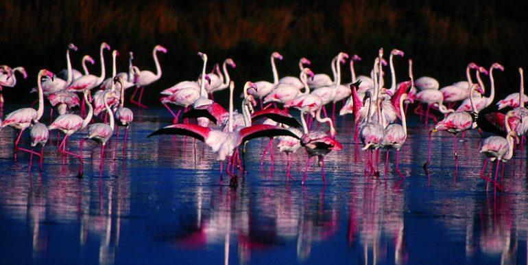 Birdwatching-Fenicotteri